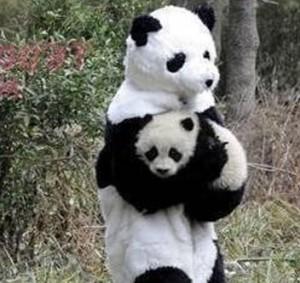 panda-penalty-recovery